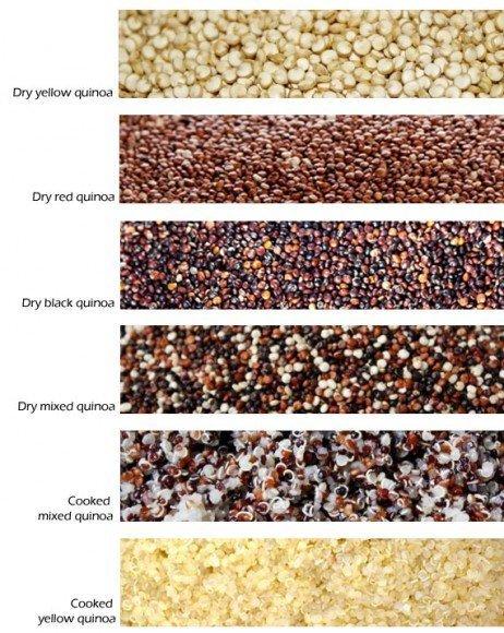 quinoa  Description Plant amp Nutrition  Britannicacom